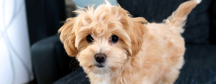 What are the Most Popular Mixed-Breed Dogs?
