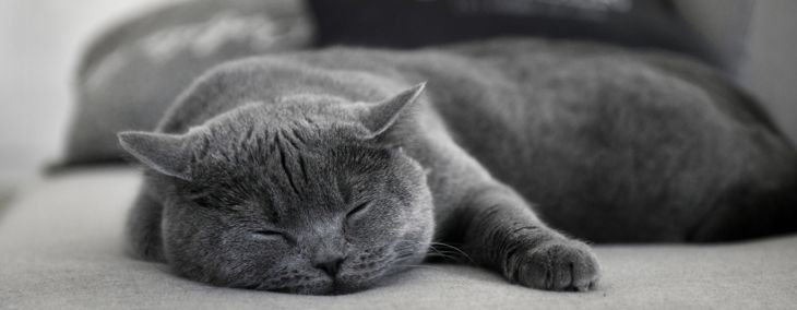 The Many Reasons Why Cats Purr