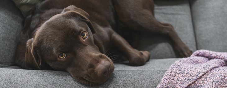 Why Do Dogs Eat Poop and How Do You Stop It?