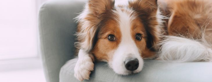 Boost Your Dog's Health With Coconut Oil