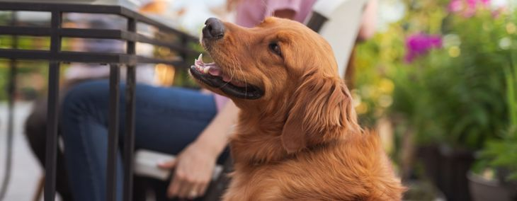 Are Hiccups Normal in Dogs?