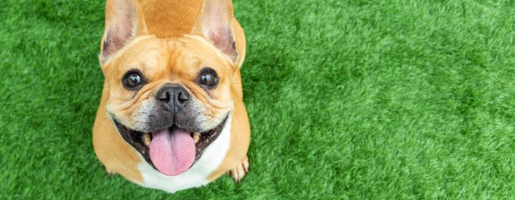 The Facts About Mucus in Dog Poop