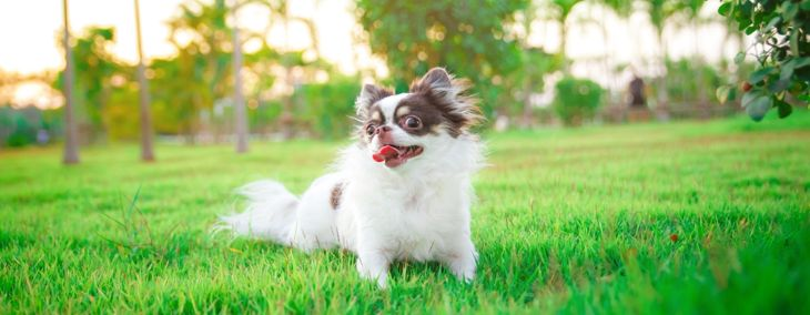 How to Identify and Treat Heat Stroke in Dogs