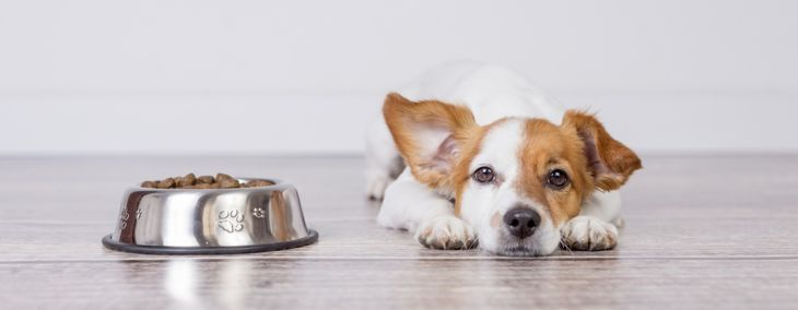 Why Is Your Dog Vomiting?
