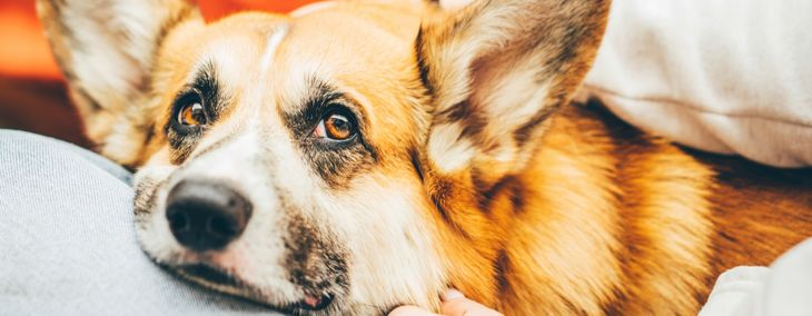 Reasons for Blood in a Dog's Stool