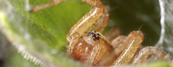 What are the Biggest Spiders in the World?