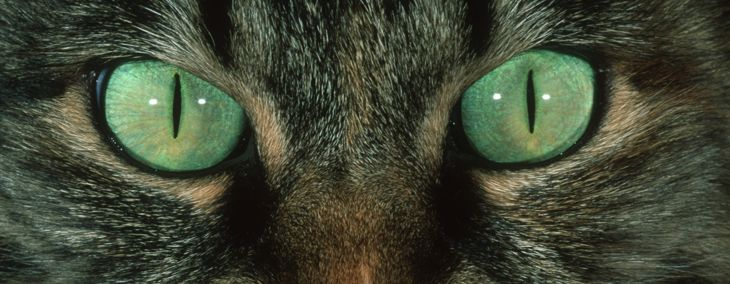 Can Cats See in the Dark?
