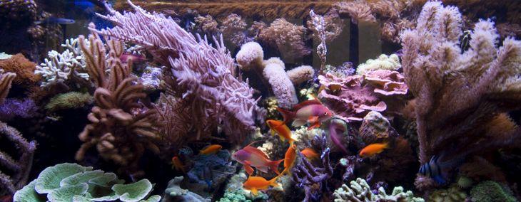 Saltwater Fish for Your Aquarium
