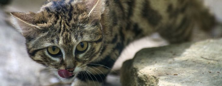 This Adorable Cat Is the Deadliest in the World