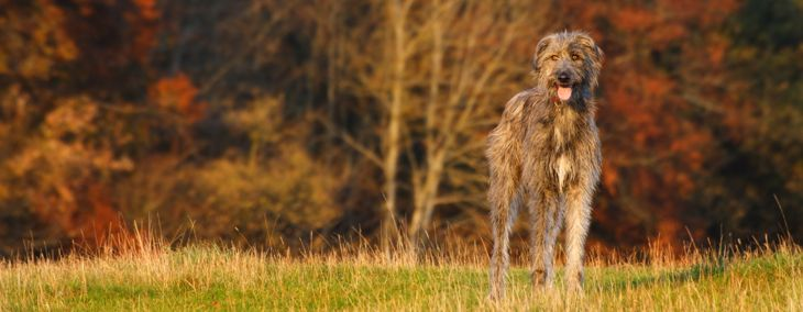 Check Out These Exciting Hound Dog Breeds