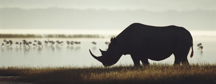 How Did These Animals Become Extinct?