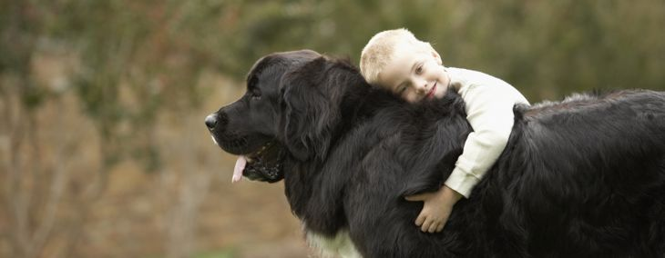 Large Dog Breeds That Make Perfect Pets