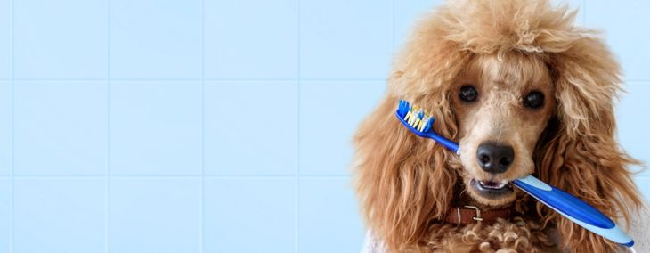 How Do You Brush a Dog's Teeth?