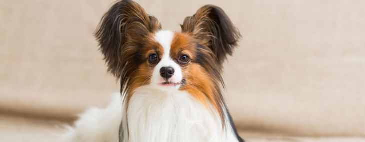 Check Out These Amazing Small Dog Breeds