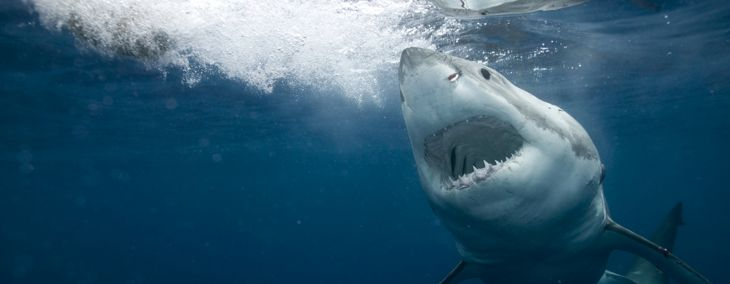 Tips to Avoid a Shark Attack