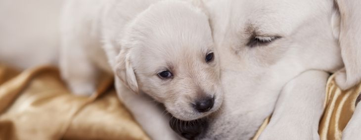 What Is Mastitis in Dogs?