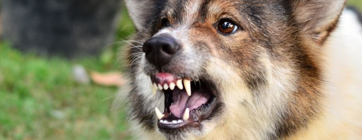 What are the Symptoms of Rabies in Dogs?