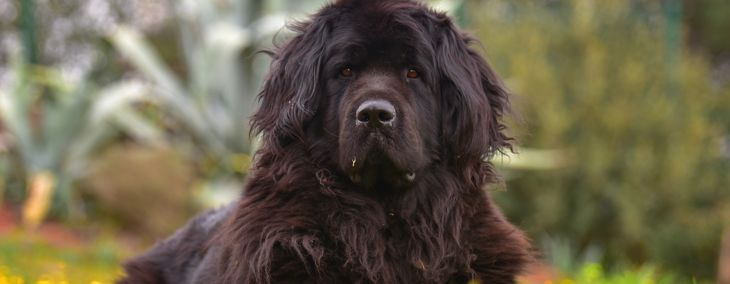 Dog Breeds That Look Like Bears