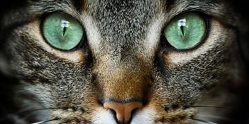 Cat Eyes Are Even Cooler Than You Thought