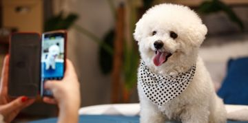 Popular Pups to Follow on Instagram
