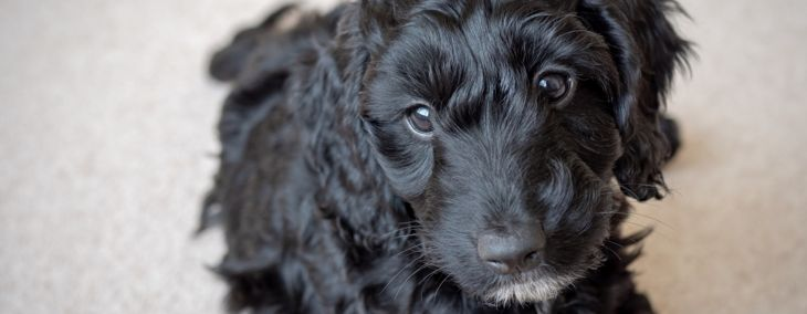 The Best Names for Black Dogs