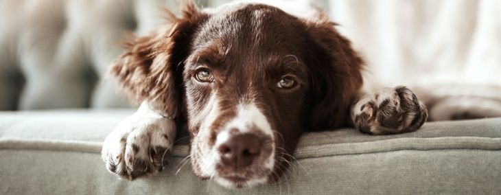 Heartworm Symptoms: What Dog Owners Need to Know