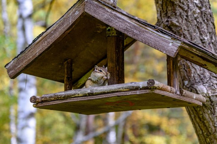 chipmunk, housing, cage, shelter