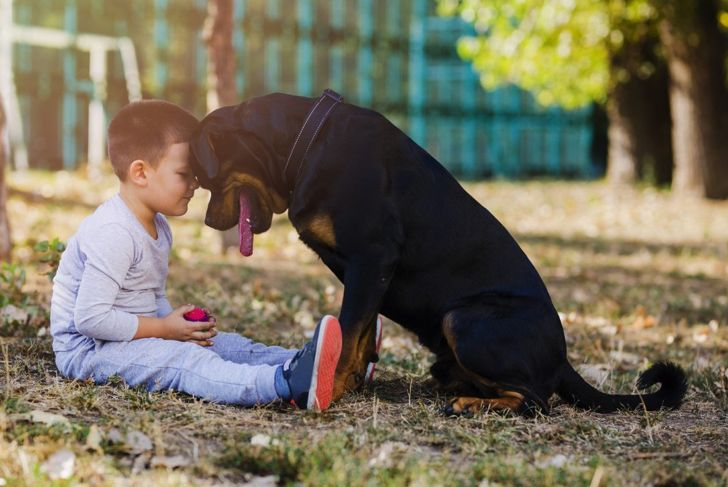 Rottweiler and little boy