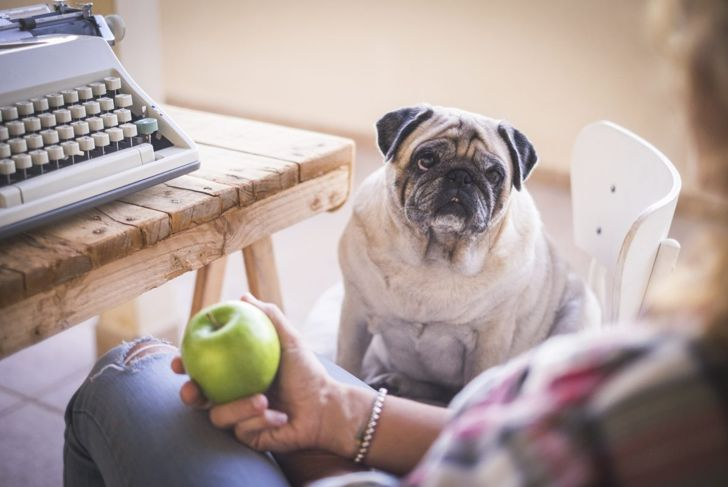 dog waits green apple