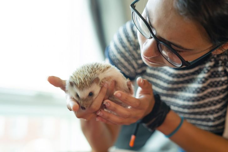 Hedgehog cuddles