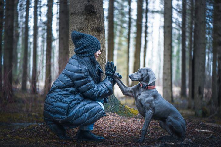 human companionship bond training