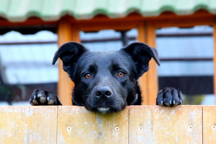 black dog fence