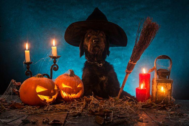 dog spooky halloween