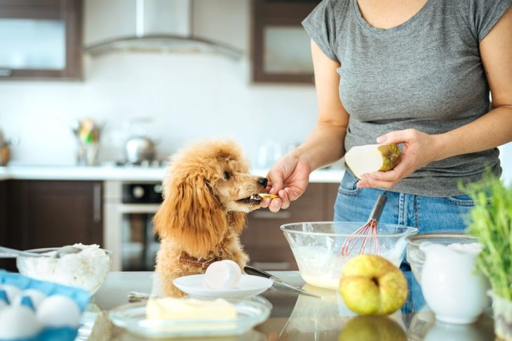 woman feeds dog pear