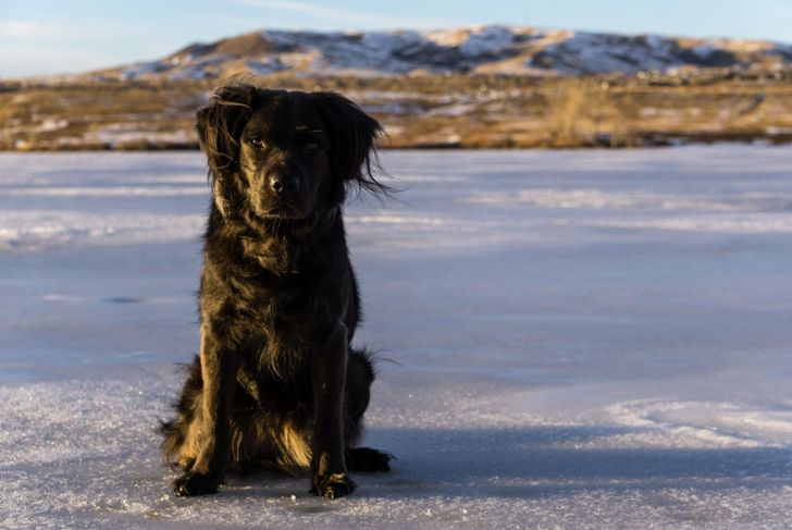 dog icy lake