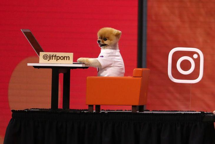 jiffpom instagram conference