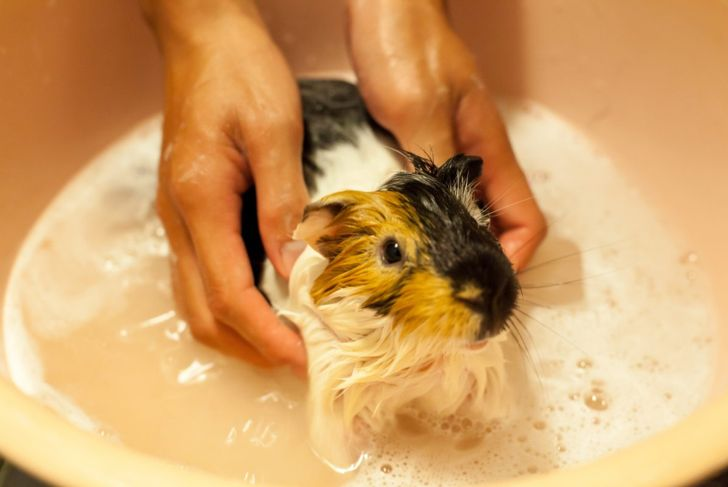 skin buildup coat condition bathe