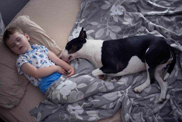 Two years old boy sleeping with his bull terrier dog.