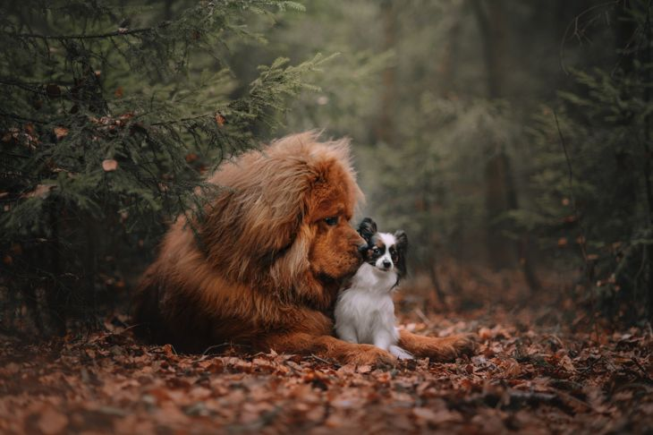 Two dogs on a walk in the autumn forest