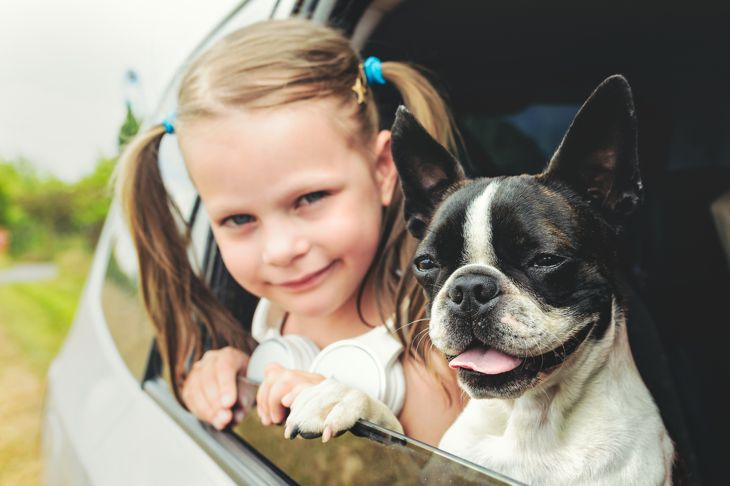 Child girl and dog - boston terrier - looking out the open car window
