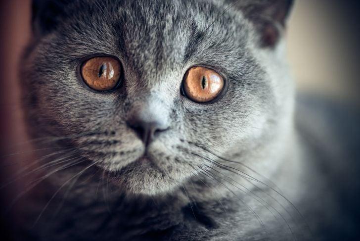 Cute little kitten close-up, age 3 months