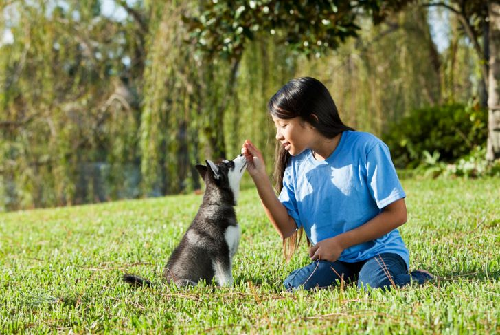Preteen Asian girl (12 years) training Alaskan Klee Kai puppy (12 weeks).