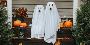 Adorable Canine Halloween Costume Ideas