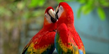 All About the Vibrant and Vivacious Macaw