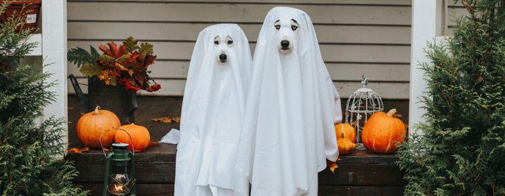 Adorable Canine Halloween Costume Ideas