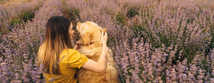 How Your Dog Can Benefit From Essential Oils
