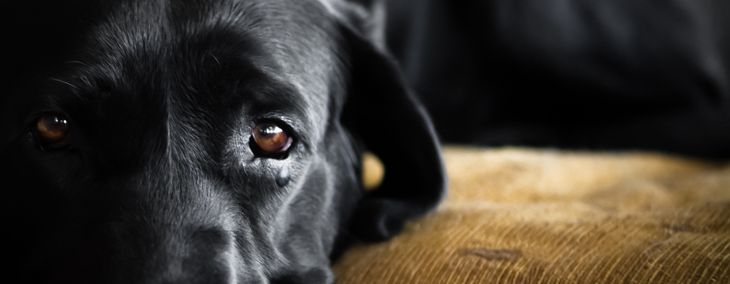 Eye Infections in Dogs: Symptoms and Treatment
