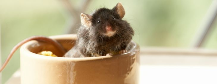 How To Keep and Care for Pet Mice