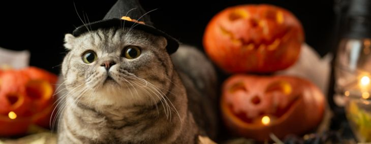 Cute and Spooky Halloween Costume Ideas for Cats