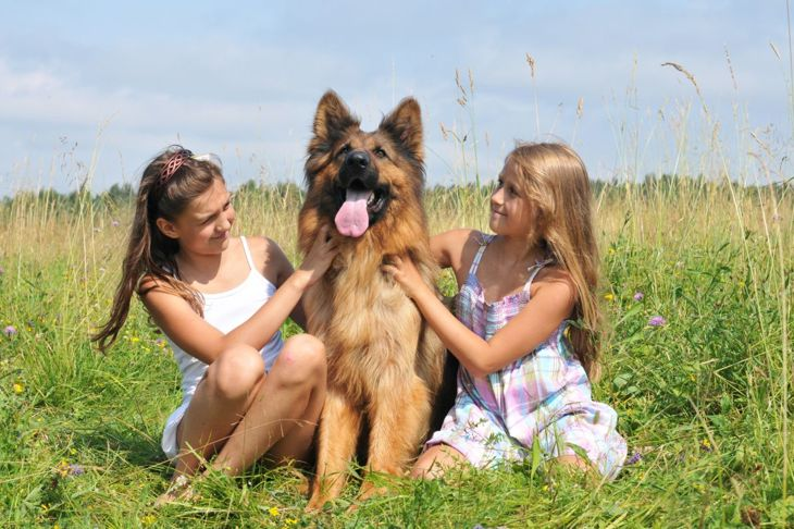 King shepherd with two young girls